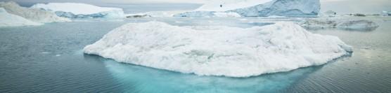 Disparitia tacuta a Arcticii
